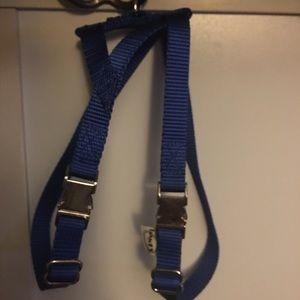 Blue Pig Harness